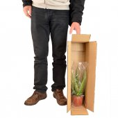 Immagine di 'Dracaena Marginata Intrecciata - altezza 90 cm'