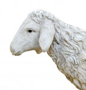 Immagine di 'Pecora testa alta Linea Martino Landi - presepe da 50 cm'