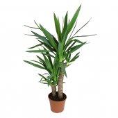 Yucca - altezza 90 cm